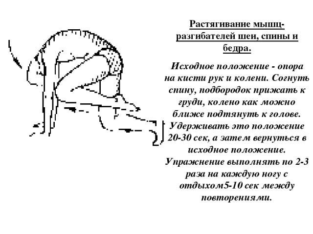 Растягивание мышц-разгибателей шеи, спины и бедра. Исходное положение - опора на кисти рук и колени. Согнуть спину, подбородок прижать к груди, колено как можно ближе подтянуть к голове. Удерживать это положение 20-30 сек, а затем вернуться в исходн…