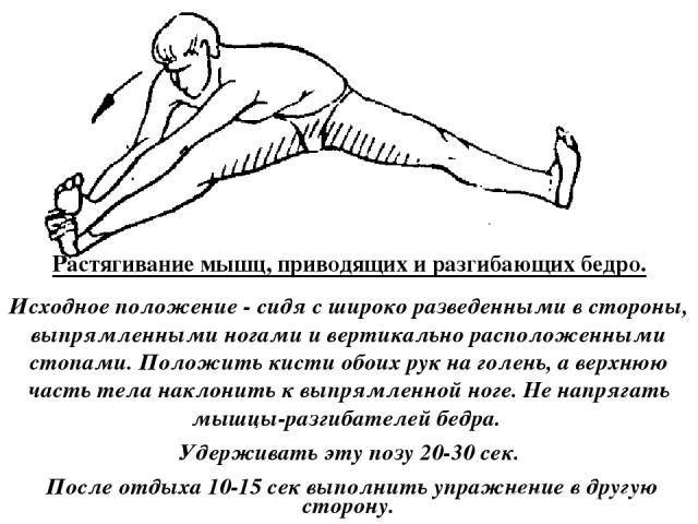 Растягивание мышц, приводящих и разгибающих бедро. Исходное положение - сидя с широко разведенными в стороны, выпрямленными ногами и вертикально расположенными стопами. Положить кисти обоих рук на голень, а верхнюю часть тела наклонить к выпрямленно…