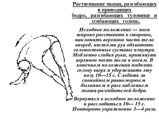 Растягивание мышц, разгибающих и приводящих бедро, разгибающих туловище и сгибающих голень. Исходное положение — ноги широко расставить в стороны, наклонить верхнюю часть тела вперед, кистями рук обхватить голеностопные суставы изнутри. Медленно сги…