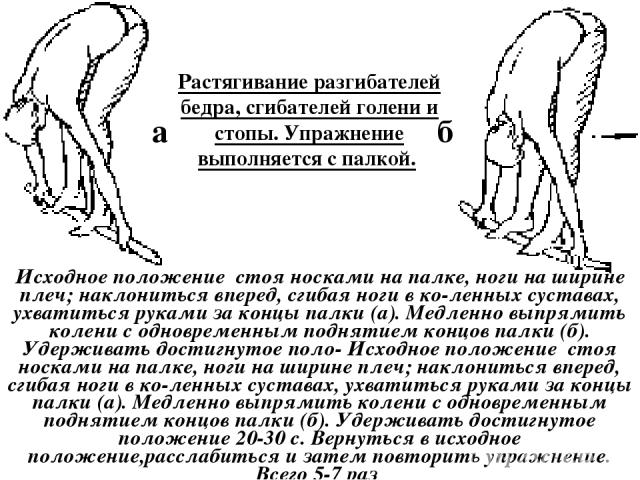 Растягивание разгибателей бедра, сгибателей голени и стопы. Упражнение выполняется с палкой. Исходное положение стоя носками на палке, ноги на ширине плеч; наклониться вперед, сгибая ноги в ко ленных суставах, ухватиться руками за концы палки (а). М…