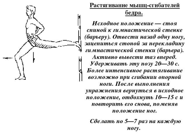 Растягивание мышц-сгибателей бедра. Исходное положение — стоя спиной к гимнастической стенке (барьеру). Отвести назад одну ногу, зацепиться стопой за перекладину гимнастической стенки (барьера). Активно вывести таз вперед. Удерживать эту позу 20—30 …