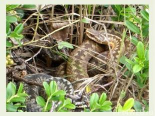 Продолжим. Змея, шурша листвой дубовой, Зашевелилася в дупле. И в лес пошла, бле