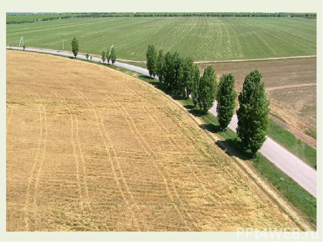 Продолжим. Опять привольные поля Проходят мимо нас кругами, И хутора и тополя Плывут, скрываясь за полями.