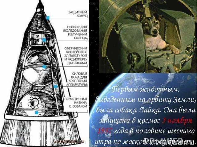 Первым животным, выведенным на орбиту Земли, была собака Лайка. Она была запущена в космос 3 ноября 1957 года в половине шестого утра по московскому времени.