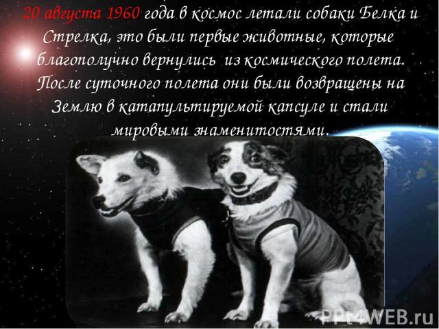 20 августа 1960 года в космос летали собаки Белка и Стрелка, это были первые животные, которые благополучно вернулись из космического полета. После суточного полета они были возвращены на Землю в катапультируемой капсуле и стали мировыми знаменитостями.