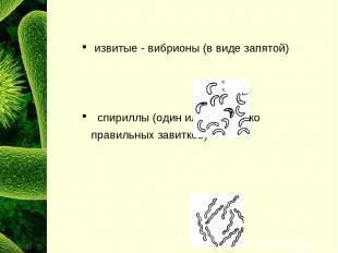 извитые - вибрионы (в виде запятой) спириллы (один или несколько правильных зави