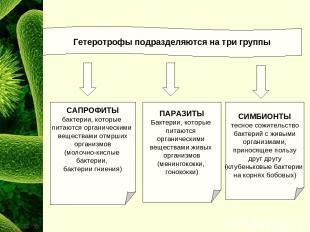 Гетеротрофы подразделяются на три группы САПРОФИТЫ бактерии, которые питаются ор