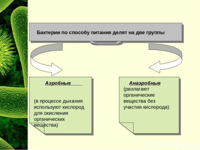 Бактерии по способу питания делят на две группы Анаэробные (разлагают органические вещества без участия кислорода) Аэробные (в процессе дыхания используют кислород для окисления органических вещества)