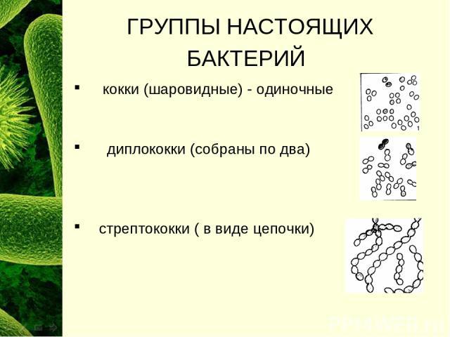 ГРУППЫ НАСТОЯЩИХ БАКТЕРИЙ кокки (шаровидные) - одиночные диплококки (собраны по два) стрептококки ( в виде цепочки)