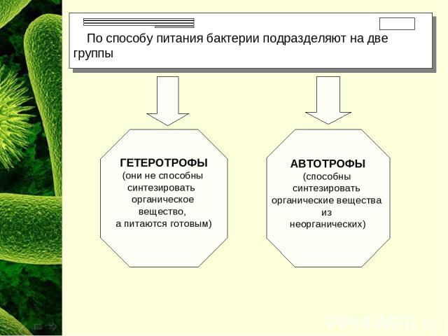 По способу питания бактерии подразделяют на две группы ГЕТЕРОТРОФЫ (они не способны синтезировать органическое вещество, а питаются готовым) АВТОТРОФЫ (способны синтезировать органические вещества из неорганических)