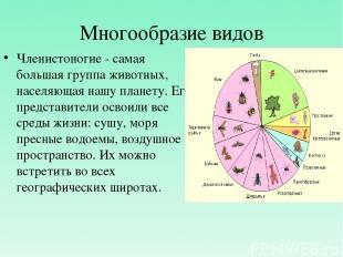 Многообразие видов Членистоногие - самая большая группа животных, населяющая наш