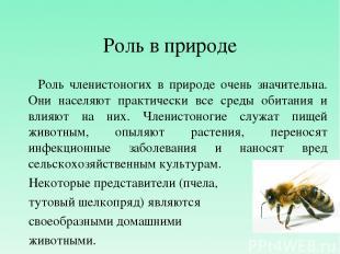 Роль в природе Роль членистоногих в природе очень значительна. Они населяют прак