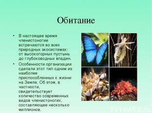 Обитание В настоящее время членистоногие встречаются во всех природных экосистем