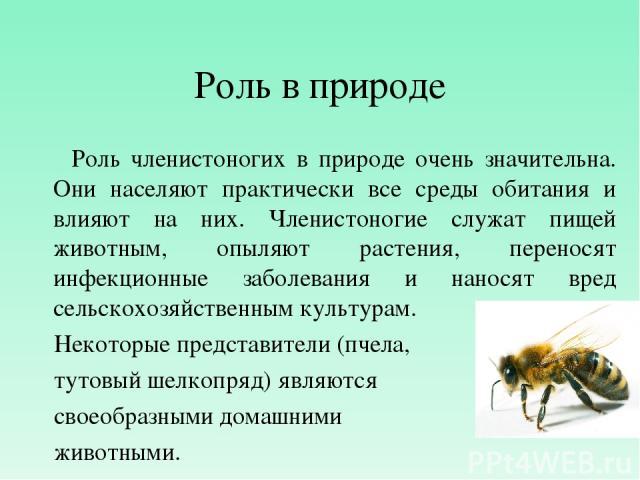 Роль в природе Роль членистоногих в природе очень значительна. Они населяют практически все среды обитания и влияют на них. Членистоногие служат пищей животным, опыляют растения, переносят инфекционные заболевания и наносят вред сельскохозяйственным…