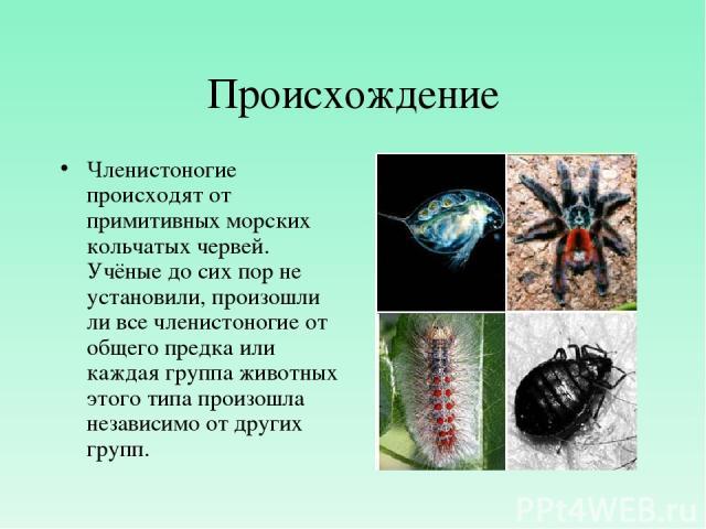 Происхождение Членистоногие происходят от примитивных морских кольчатых червей. Учёные до сих пор не установили, произошли ли все членистоногие от общего предка или каждая группа животных этого типа произошла независимо от других групп.