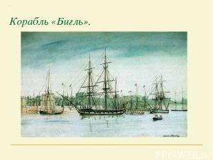 Корабль «Бигль».