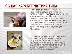Тело моллюсков состоит из несегментированного туловища, головы и ноги. Голова и