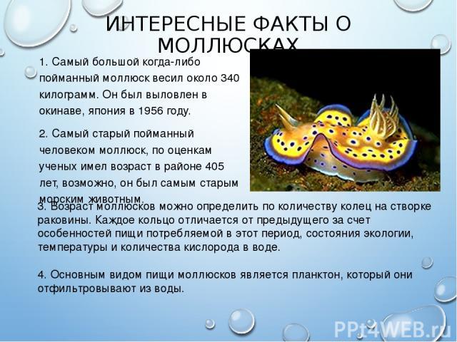 ИНТЕРЕСНЫЕ ФАКТЫ О МОЛЛЮСКАХ 1. Самый большой когда-либо пойманный моллюск весил около 340 килограмм. Он был выловлен в окинаве, япония в 1956 году. 2. Самый старый пойманный человеком моллюск, по оценкам ученых имел возраст в районе 405 лет, возмож…