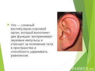 Ухо — сложный вестибулярно-слуховой орган, который выполняет две функции: воспри