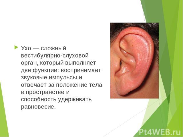 Ухо — сложный вестибулярно-слуховой орган, который выполняет две функции: воспринимает звуковые импульсы и отвечает за положение тела в пространстве и способность удерживать равновесие.