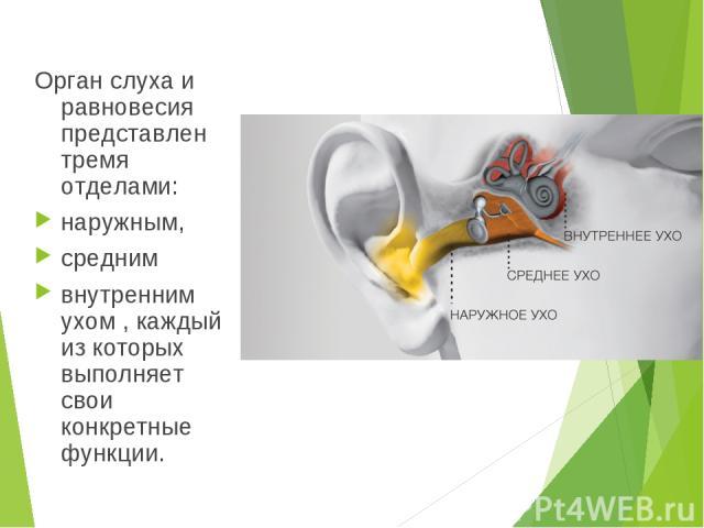 Орган слуха и равновесия представлен тремя отделами: наружным, средним внутренним ухом , каждый из которых выполняет свои конкретные функции.