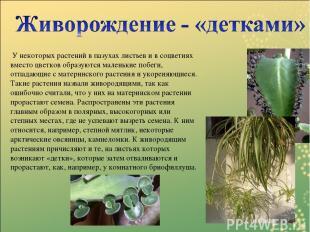 У некоторых растений в пазухах листьев и в соцветиях вместо цветков образуются м