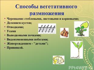 Черенками: стеблевыми, листовыми и корневыми; Делением кустов; Отводками; Усами