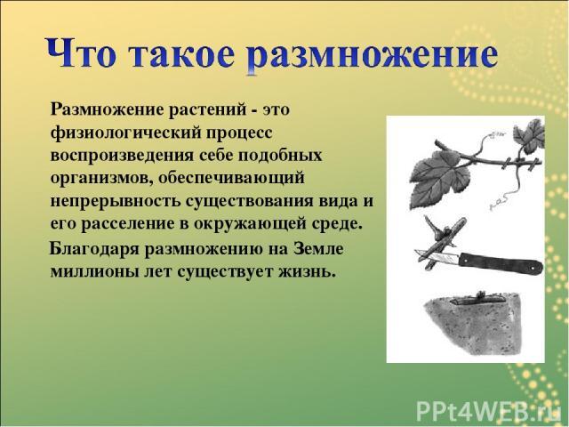 Размножение растений - это физиологический процесс воспроизведения себе подобных организмов, обеспечивающий непрерывность существования вида и его расселение в окружающей среде. Благодаря размножению на Земле миллионы лет существует жизнь.