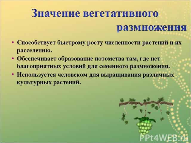 Способствует быстрому росту численности растений и их расселению. Обеспечивает образование потомства там, где нет благоприятных условий для семенного размножения. Используется человеком для выращивания различных культурных растений.