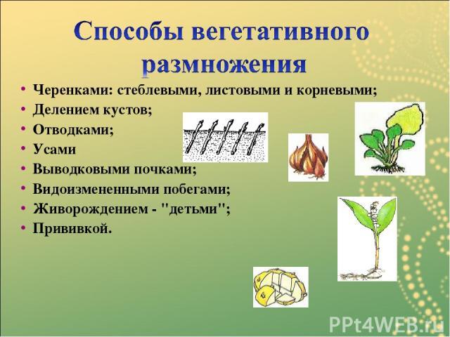 Черенками: стеблевыми, листовыми и корневыми; Делением кустов; Отводками; Усами Выводковыми почками; Видоизмененными побегами; Живорождением -