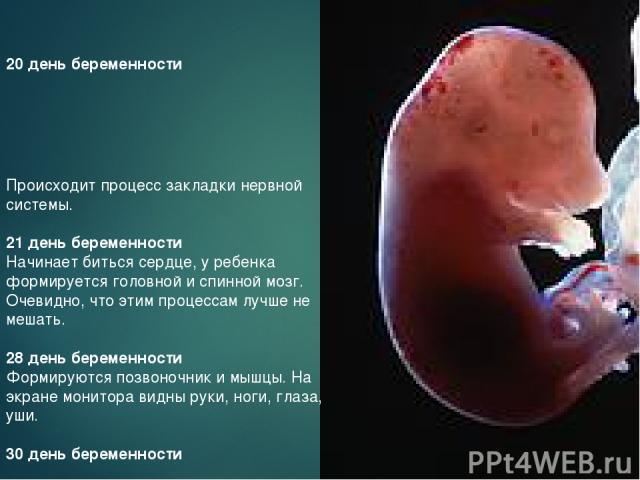 20 день беременности Происходит процесс закладки нервной системы. 21 день беременности Начинает биться сердце, у ребенка формируется головной и спинной мозг. Очевидно, что этим процессам лучше не мешать. 28 день беременности Формируются позвоночник …