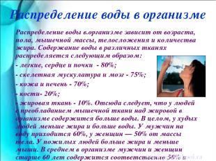 Распределение воды в.организме зависит от возраста, пола, мышечной массы, телосл