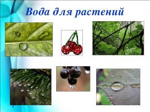 Вода для растений