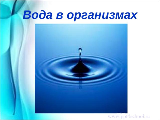 Вода в организмах www.ppt4school.ru