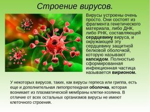 Строение вирусов. Вирусы устроены очень просто. Они состоят из фрагмента генетич