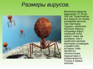 Размеры вирусов. Величина вирусов варьирует от 20 до 300 нм. Практически все вир