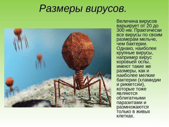 Размеры вирусов. Величина вирусов варьирует от 20 до 300 нм. Практически все вирусы по своим размерам мельче, чем бактерии. Однако, наиболее крупные вирусы, например вирус коровьей оспы, имеют такие же размеры, как и наиболее мелкие бактерии (хламид…