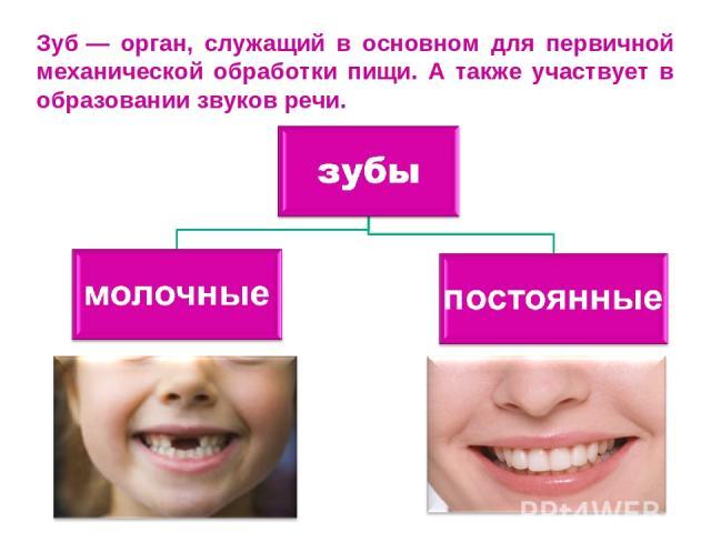 Зуб— орган, служащий в основном для первичной механической обработки пищи. А также участвует в образовании звуков речи.