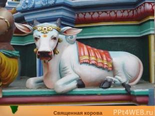 Священная корова