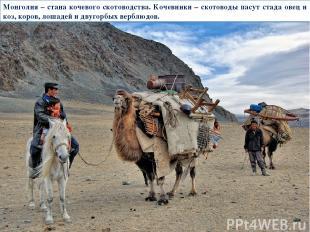 Монголия – стана кочевого скотоводства. Кочевники – скотоводы пасут стада овец и