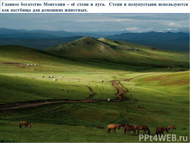 Главное богатство Монголии – её степи и луга. Степи и полупустыни используются как пастбища для домашних животных.