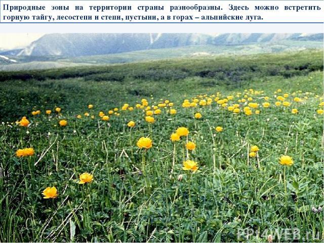 Природные зоны на территории страны разнообразны. Здесь можно встретить горную тайгу, лесостепи и степи, пустыни, а в горах – альпийские луга.