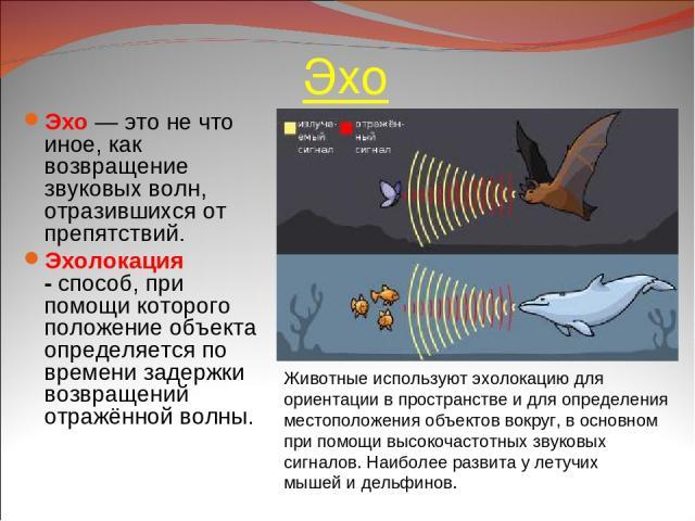Эхо Эхо — это не что иное, как возвращение звуковых волн, отразившихся от препятствий. Эхолокация -способ, при помощи которого положение объекта определяется по времени задержки возвращений отражённой волны. Животные используют эхолокацию для ориен…