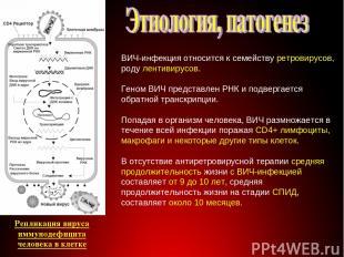 Строение вируса ВИЧ-инфекция относится к семейству ретровирусов, роду лентивирус