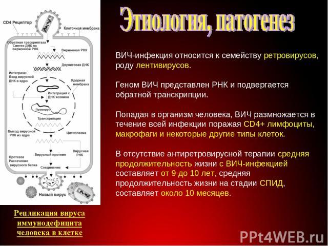 Строение вируса ВИЧ-инфекция относится к семейству ретровирусов, роду лентивирусов. Геном ВИЧ представлен РНК и подвергается обратной транскрипции. Попадая в организм человека, ВИЧ размножается в течение всей инфекции поражая CD4+ лимфоциты, макрофа…