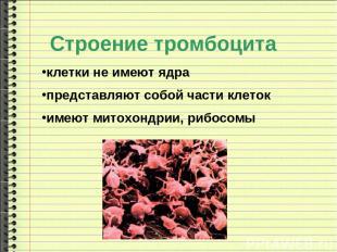 клетки не имеют ядра представляют собой части клеток имеют митохондрии, рибосомы