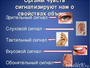 Органы чувств сигнализируют нам о свойствах объекта. Зрительный сигнал – Слухово