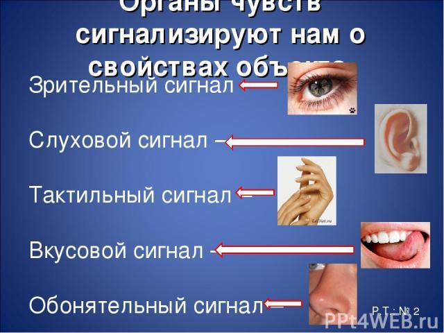 Органы чувств сигнализируют нам о свойствах объекта. Зрительный сигнал – Слуховой сигнал – Тактильный сигнал – Вкусовой сигнал – Обонятельный сигнал – Р.Т.: № 2