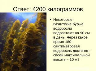 Ответ: 4200 килограммов Некоторые гигантские бурые водоросли подрастают на 90 см