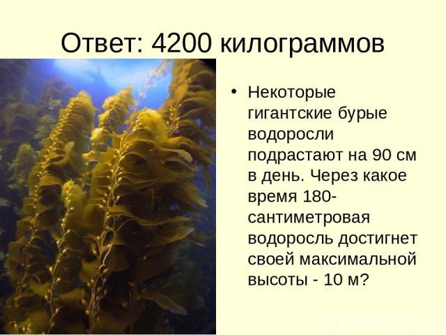 Ответ: 4200 килограммов Некоторые гигантские бурые водоросли подрастают на 90 см в день. Через какое время 180-сантиметровая водоросль достигнет своей максимальной высоты - 10 м?